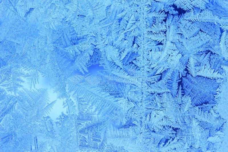 Fleurs de Frost image stock