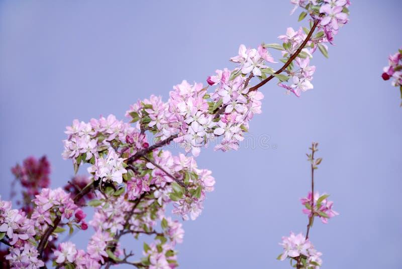 Fleurs de fruit de source photo stock