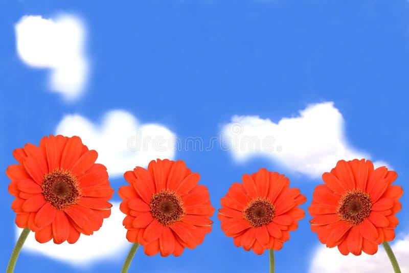 Fleurs de Gerbera sur le ciel bleu image stock