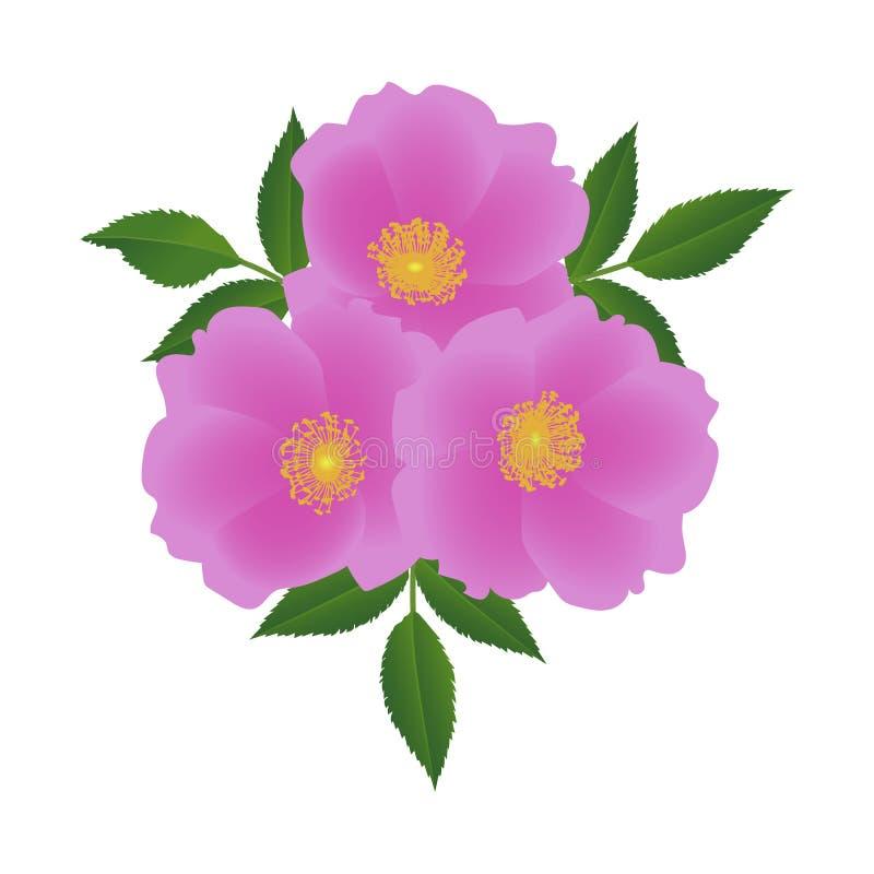 Fleurs de hanche de Rose avec des feuilles illustration de vecteur