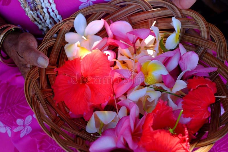Fleurs de Hawaiin, images stock