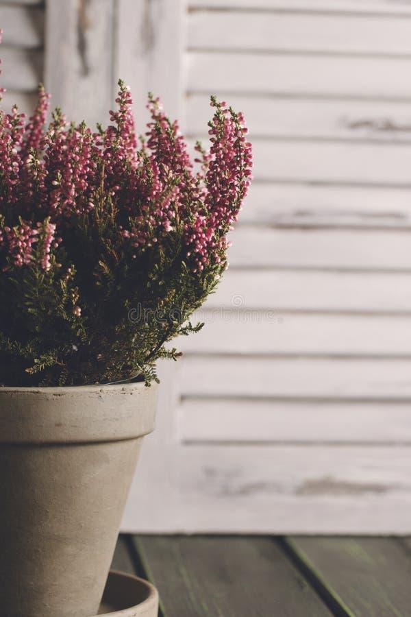 Fleurs de Heather dans le pot de fleurs gris Fond en bois d'auvents Photo modifiée la tonalité L'espace pour le texte images libres de droits