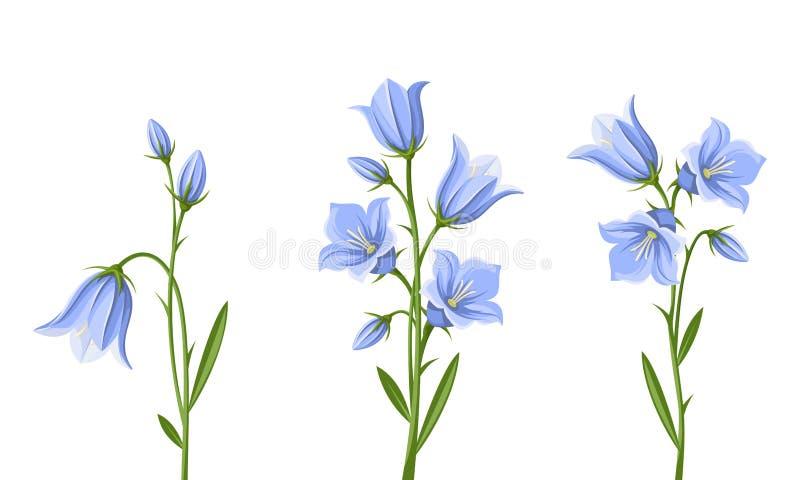 Fleurs de jacinthe des bois Illustration de vecteur illustration libre de droits