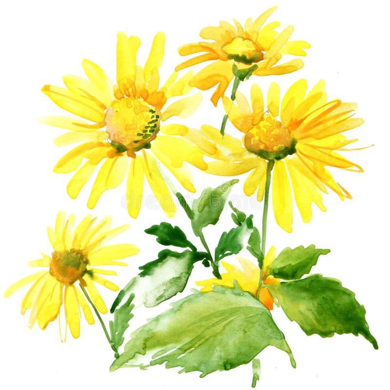 Fleurs de jardin d'été Illustration d'aquarelle illustration stock