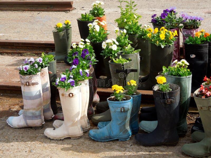 Fleurs de jardin dans des bottes en caoutchouc photos stock