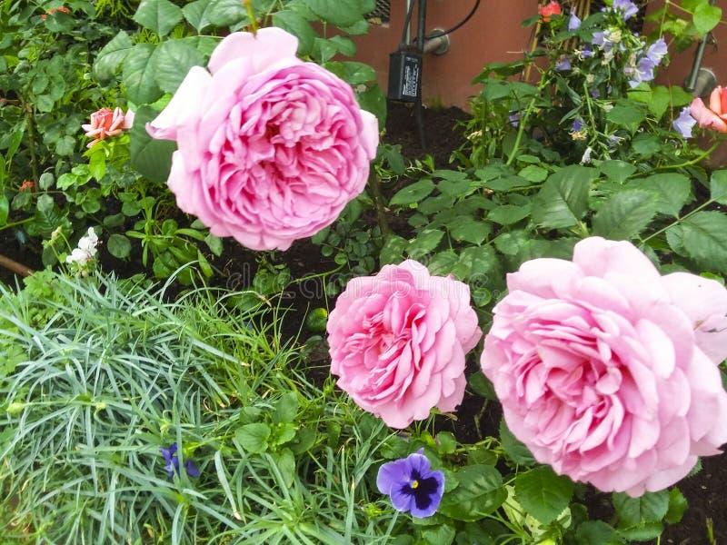 Fleurs de jardin de terrain de jeu du ` s de nature images libres de droits