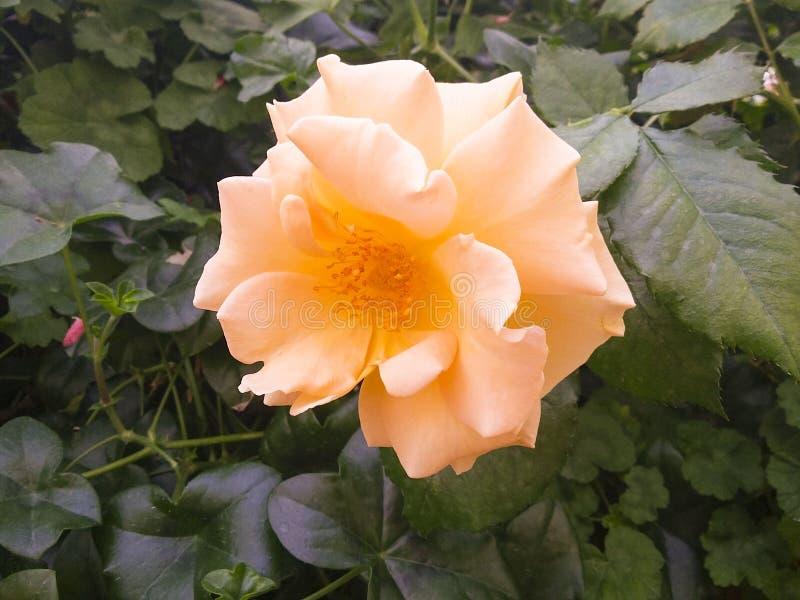 Fleurs de jardin de terrain de jeu du ` s de nature image stock