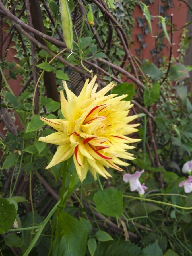 Fleurs de jardin de terrain de jeu du ` s de nature photographie stock