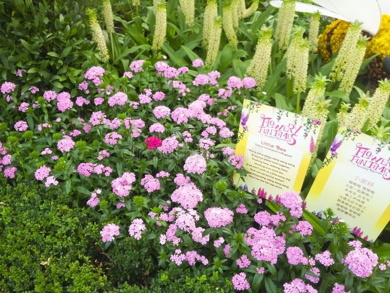Fleurs de jardin de terrain de jeu du ` s de nature photographie stock libre de droits