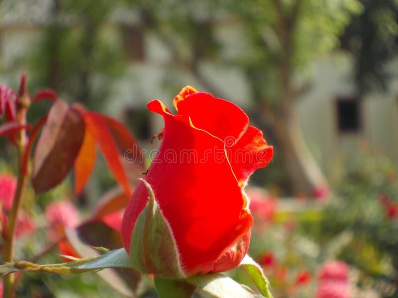 Fleurs de jardin de terrain de jeu du ` s de nature photo stock