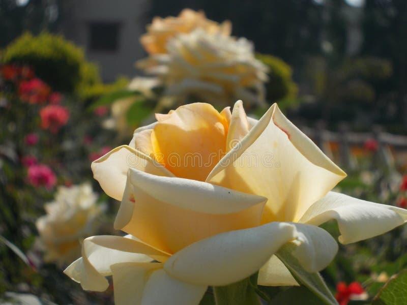 Fleurs de jardin de terrain de jeu du ` s de nature image libre de droits