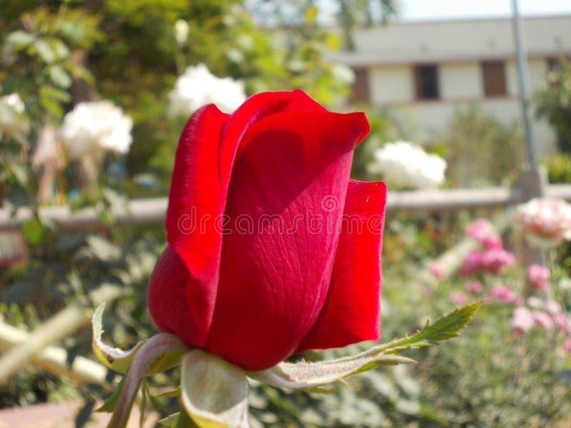Fleurs de jardin de terrain de jeu du ` s de nature photos stock