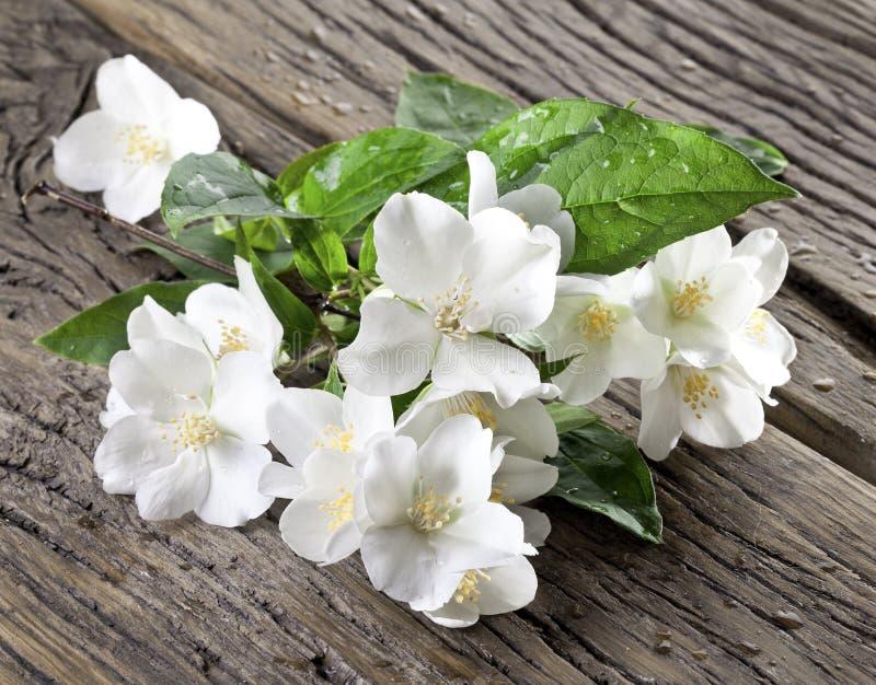 Fleurs de jasmin au-dessus de vieille table en bois images stock