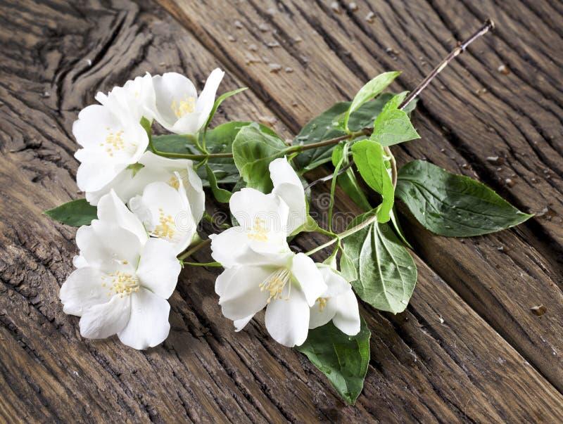 Fleurs de jasmin au-dessus de vieille table en bois photo stock