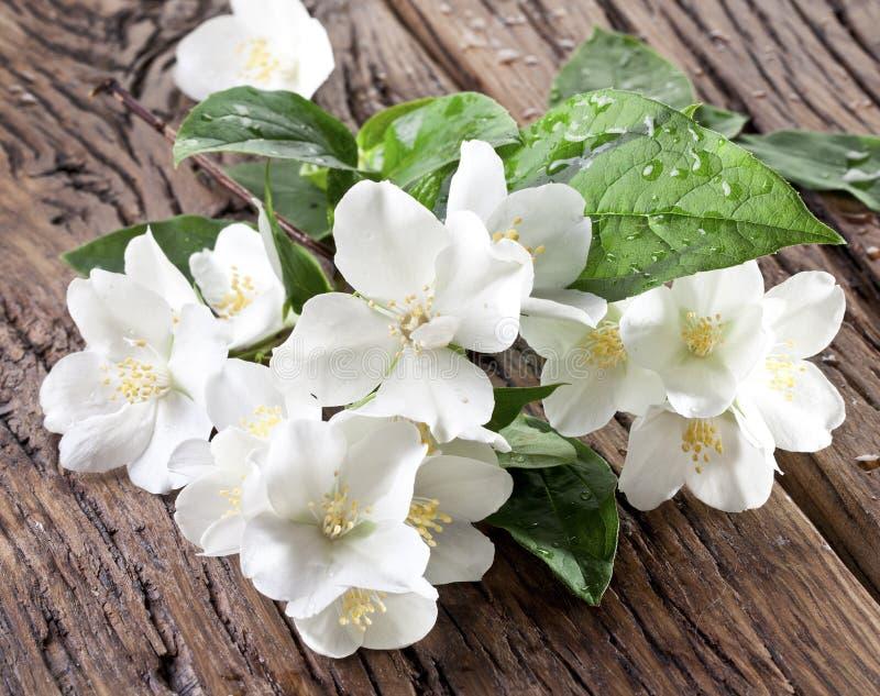 Fleurs de jasmin au-dessus de vieille table en bois photographie stock