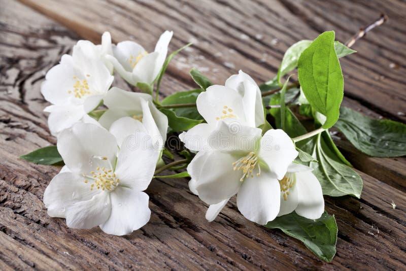 Fleurs de jasmin au-dessus de vieille table en bois photos libres de droits
