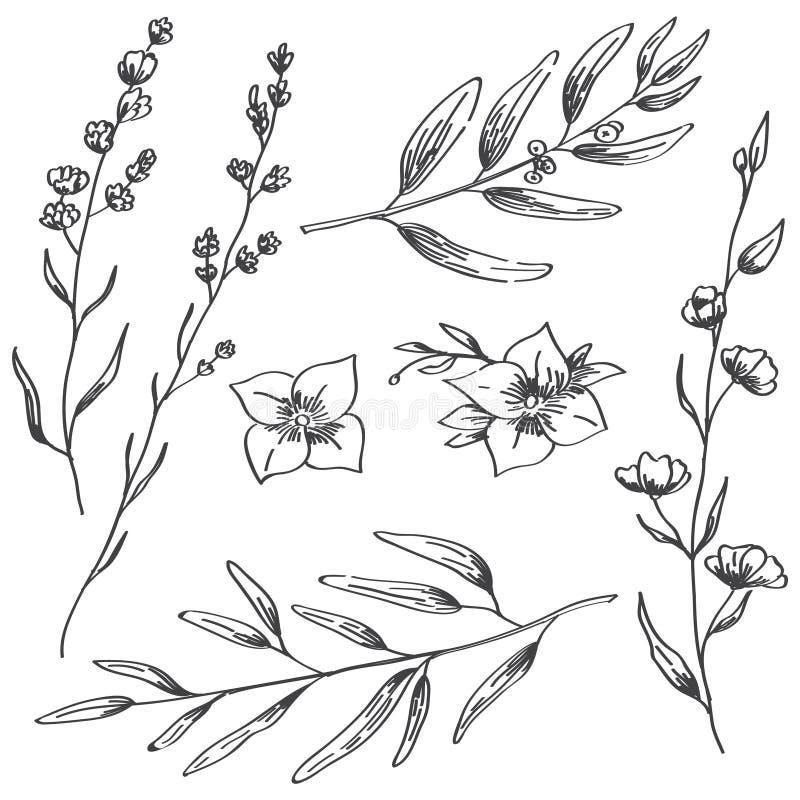 Fleurs de jasmin, lavande et croquis tiré par la main de branches naturelles image libre de droits