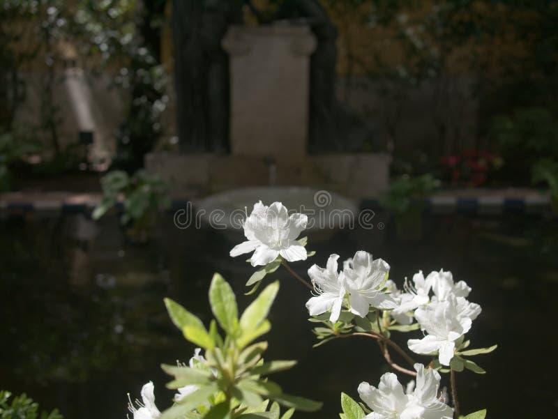Fleurs de l'échelle de Jacob fleurissant au jardin du musée de Sorolla photo stock
