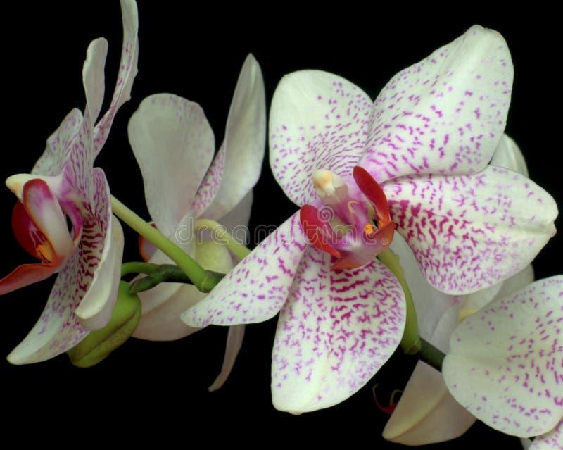 fleurs de l'amour photographie stock