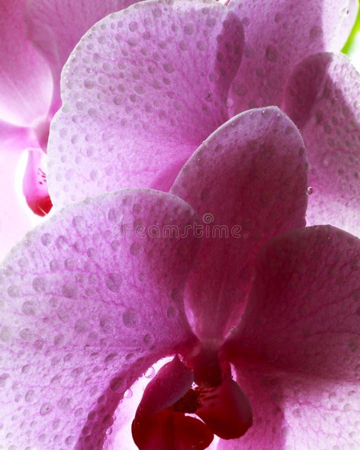 fleurs de l'amour images stock
