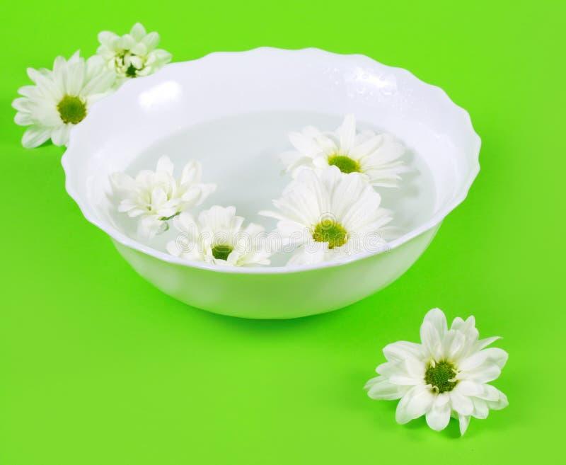 Fleurs de l'eau et de source photographie stock