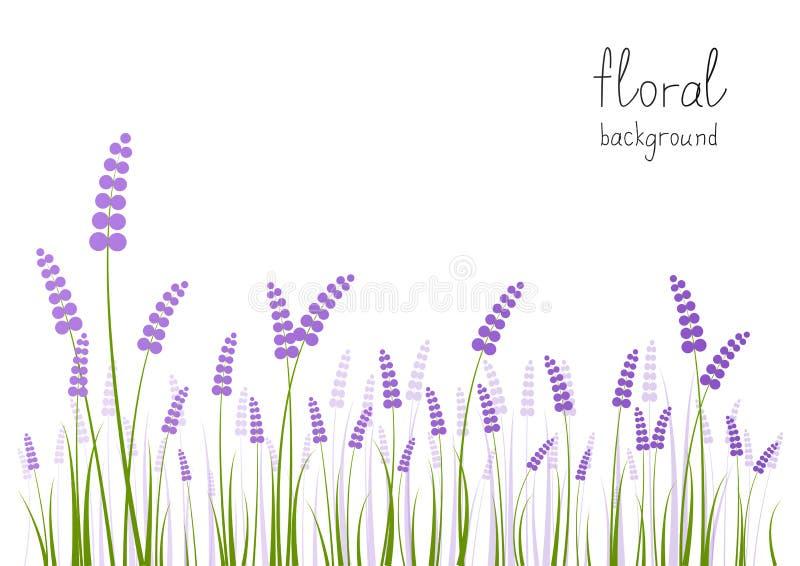 Fleurs de lavande illustration de vecteur