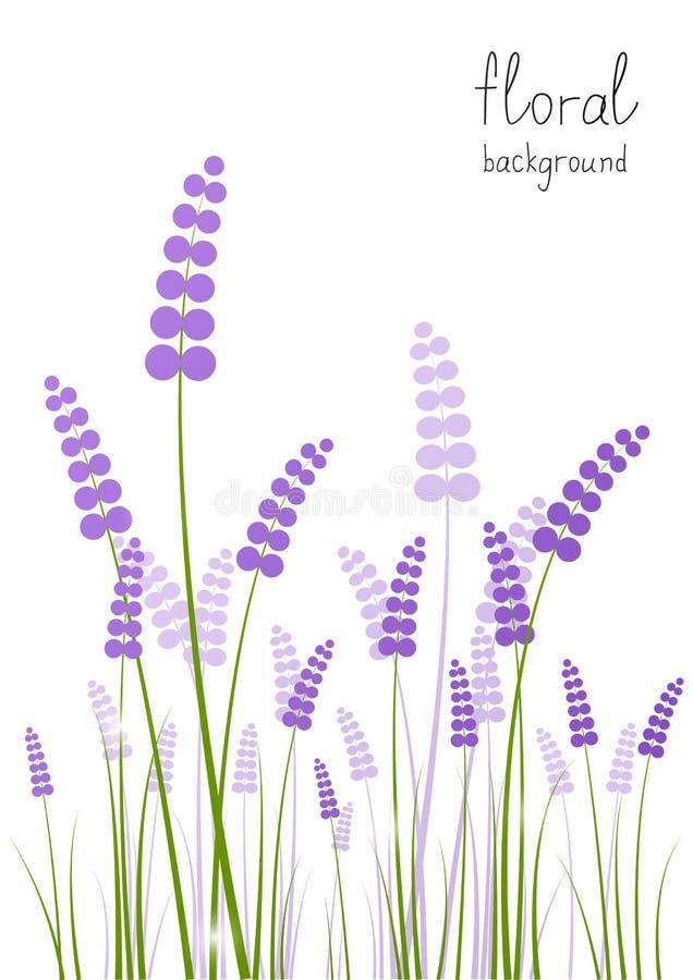 Fleurs de lavande illustration stock