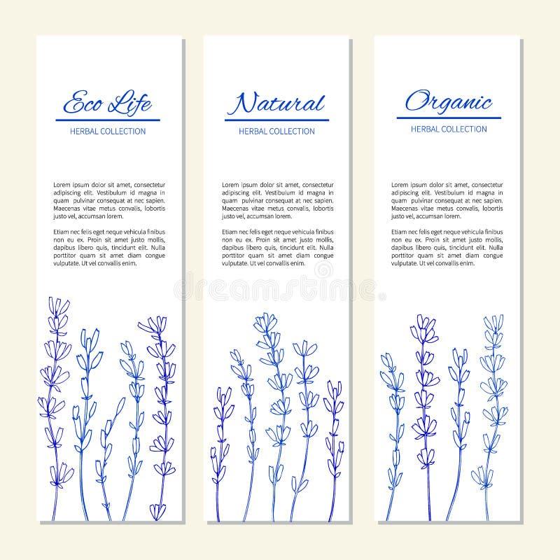 Fleurs de lavande d'isolement sur un blanc, bannières verticales, labels, graphique de fines herbes de vintage de griffonnage de  illustration stock