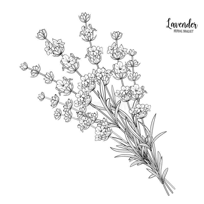 Fleurs de lavande en plan rapproché illustration stock