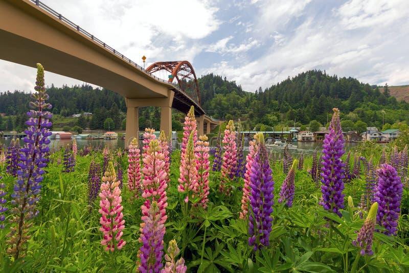 Fleurs de loup colorées fleurissant en été à Portland Orégon photo libre de droits