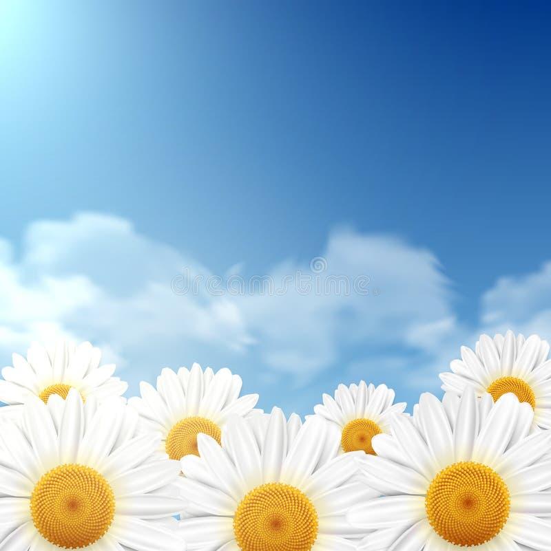 Fleurs de marguerite avec un ciel bleu illustration stock