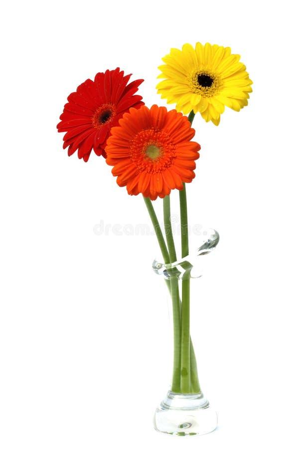 Fleurs de marguerite de Gerber d'isolement sur le blanc photos libres de droits