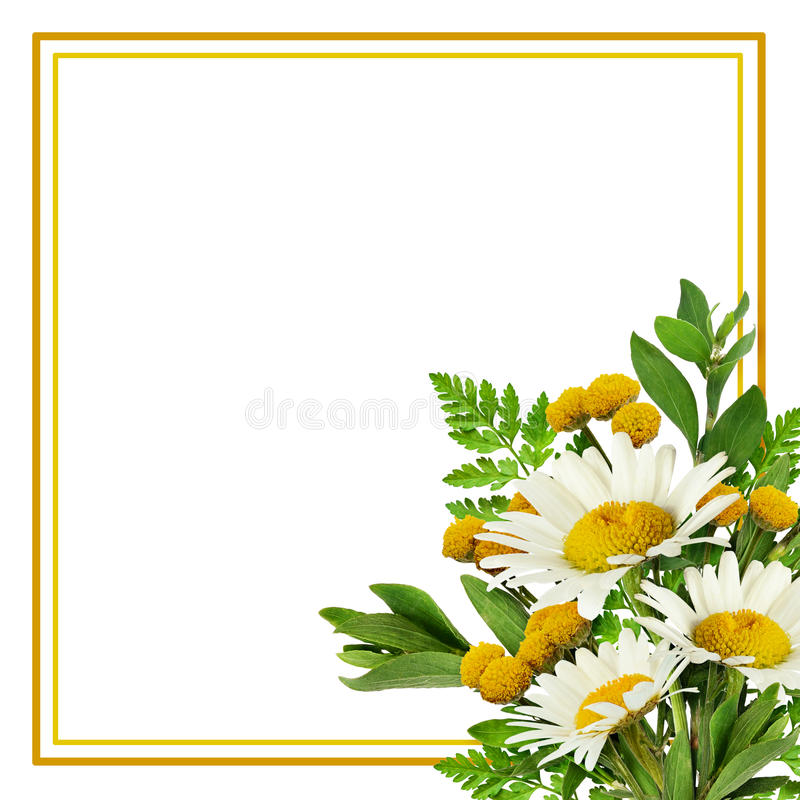 fleurs de marguerite et herbe sauvage dans une disposition faisante le coin avec le cadre photo. Black Bedroom Furniture Sets. Home Design Ideas