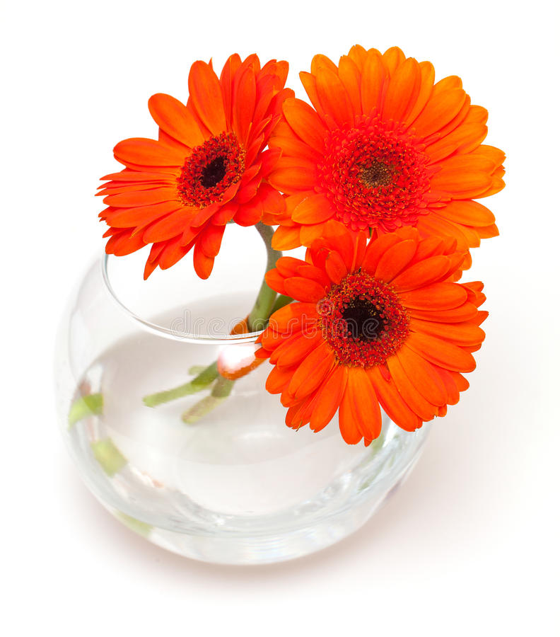 fleurs de marguerite orange dans un vase en verre photographie stock libre de droits image. Black Bedroom Furniture Sets. Home Design Ideas