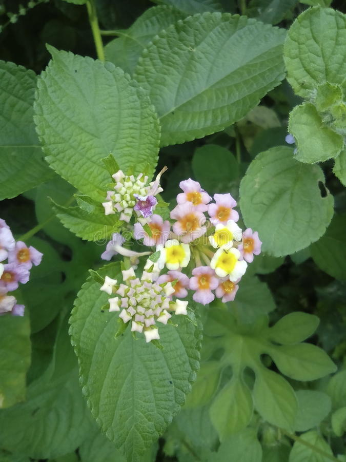 Fleurs de mauvaise herbe photographie stock