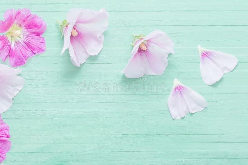 Fleurs de mauve sur le fond vert images libres de droits