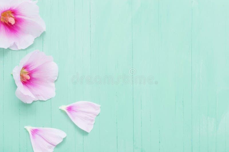 Fleurs de mauve sur le fond vert photos libres de droits
