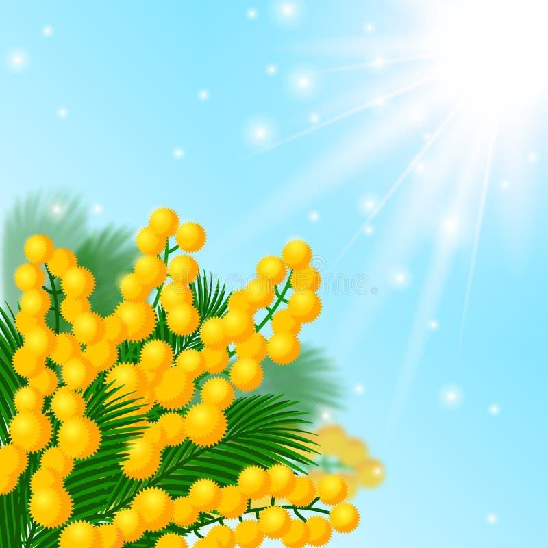 Fleurs de mimosa illustration stock