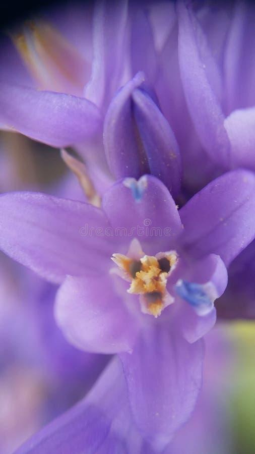 Fleurs de Mojave images libres de droits