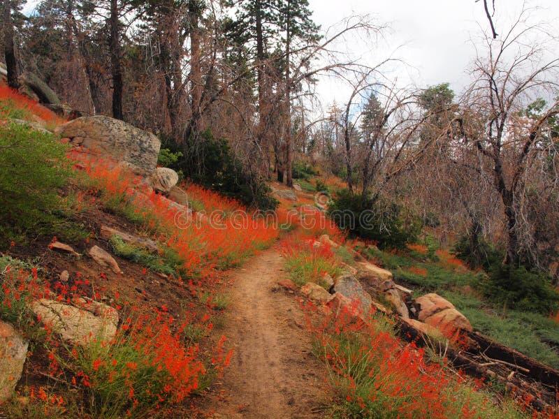 Fleurs de montagne image libre de droits