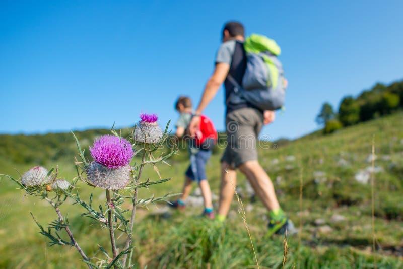 Fleurs de montagne avec la famille sur une hausse images libres de droits