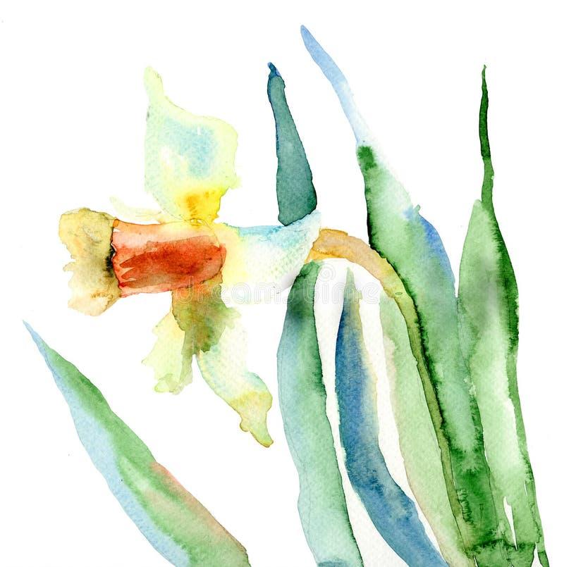Fleurs De Narcisse Images stock