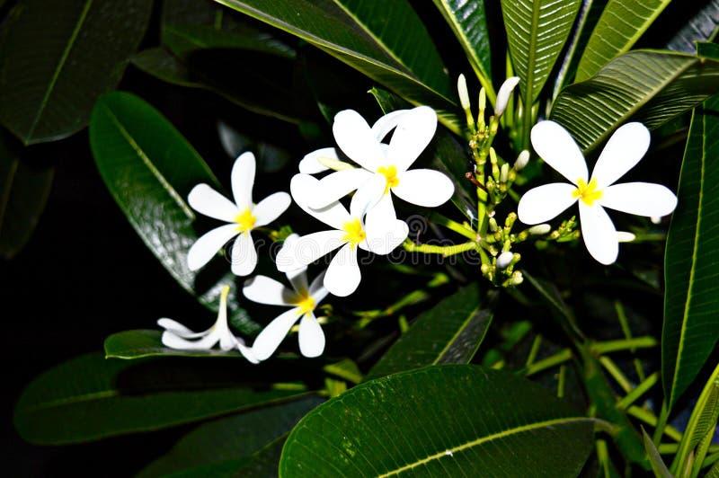 Fleurs de nuit photographie stock libre de droits