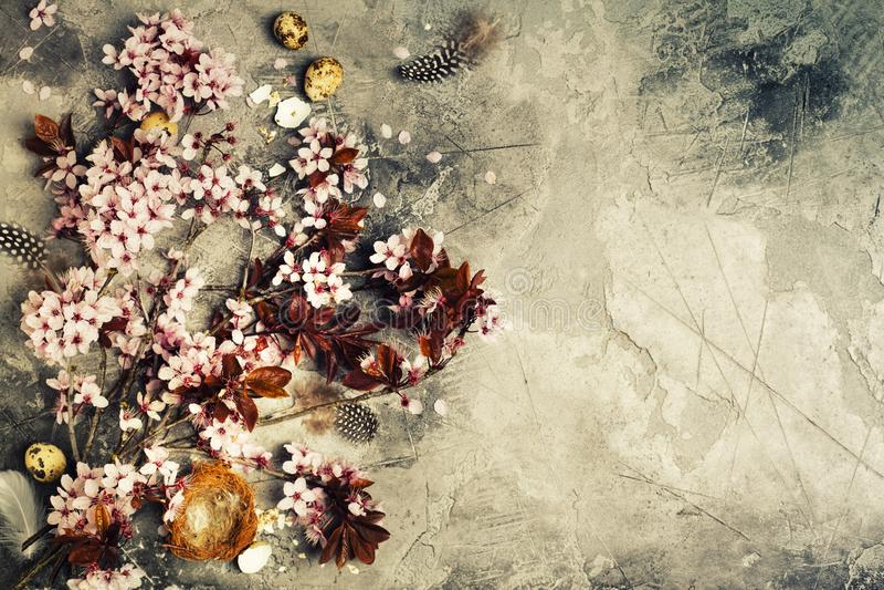 Fleurs de Pâques avec le fond de mur images stock
