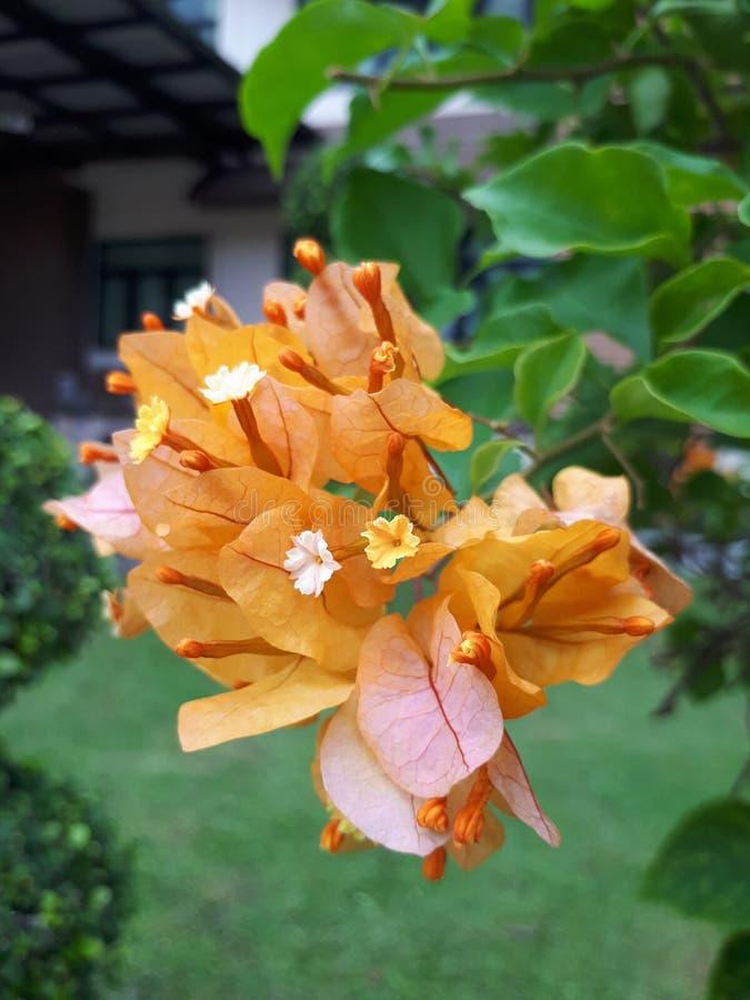 Fleurs de papier photos libres de droits