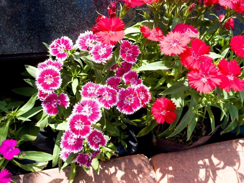 Fleurs de papillon photo libre de droits