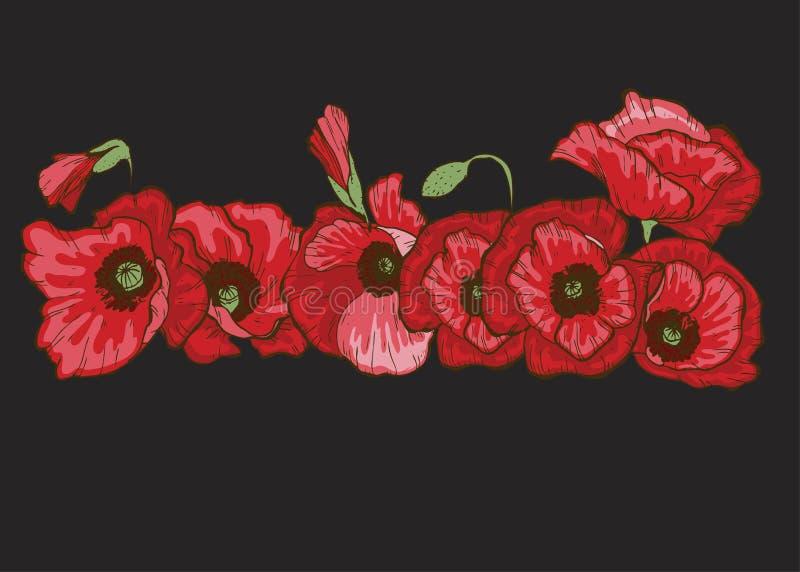 Fleurs de pavot réglées Pavots rouges de floraison d'isolement par vecteur sur le noir Illustration botanique florale pour le déc illustration libre de droits