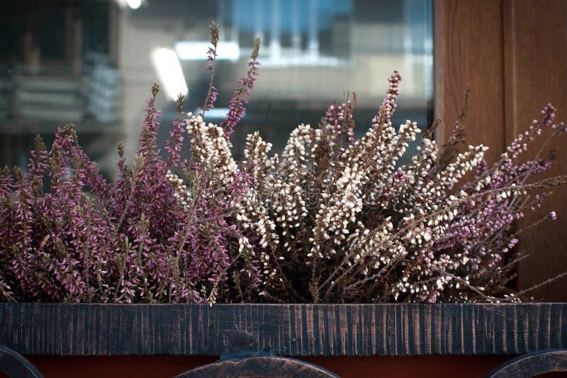 Fleurs de pens?e dans le pot de fleur dehors sur un rebord de fen?tre comme d?coration photographie stock