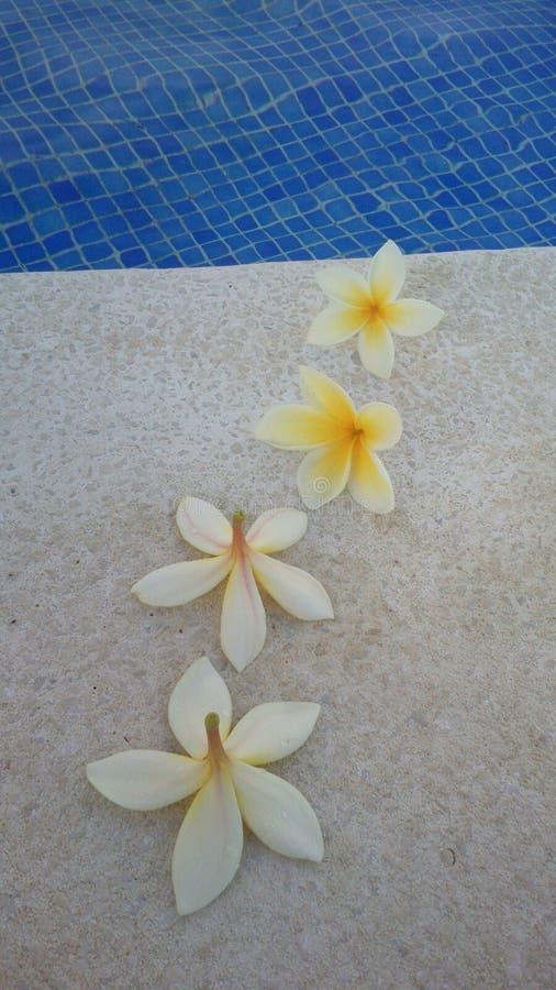 Fleurs de piscine photos libres de droits