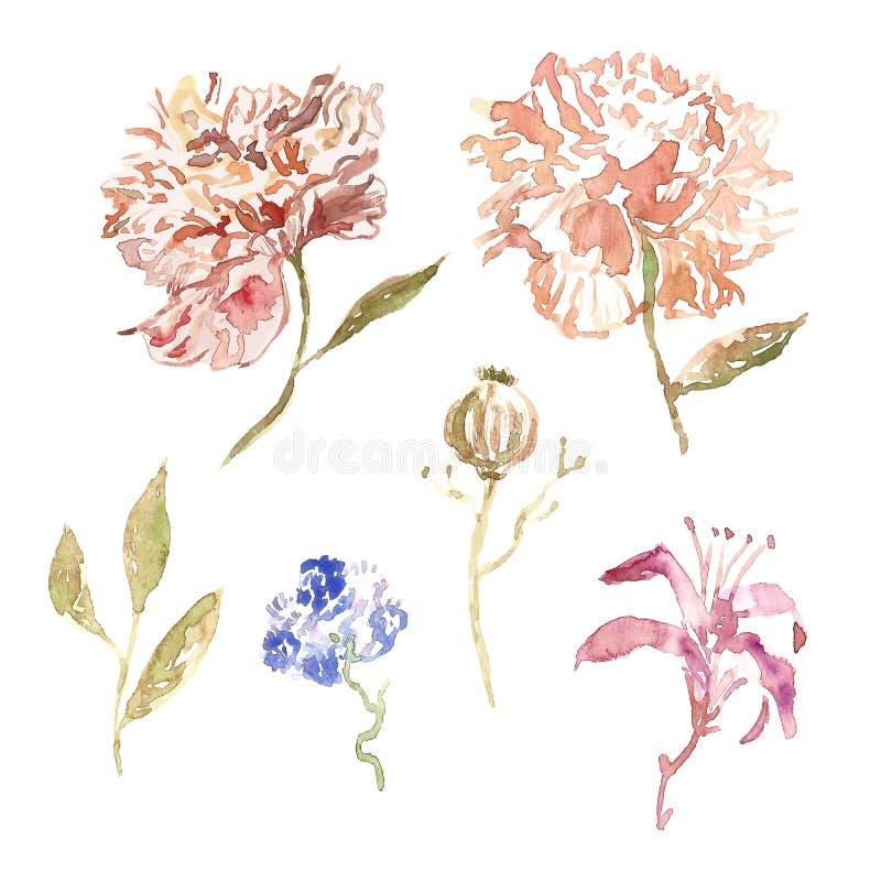 Fleurs de pivoine d'aquarelle dans la couleur beige et rose à la mode avec des feuilles d'isolement sur le fond blanc Illustratra illustration libre de droits